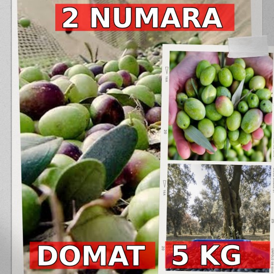 5 kg 2 Numara Yeşil Ham Domat zeytini